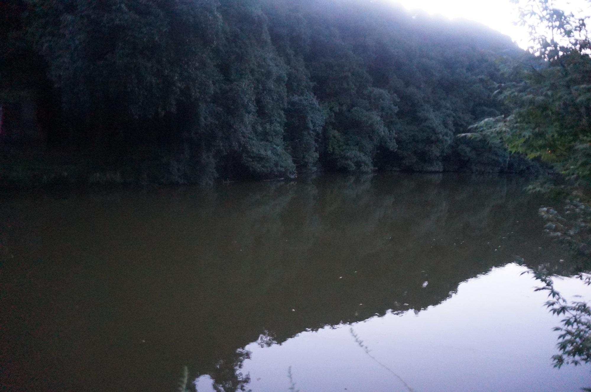 嵐山のひっそりとした池に行ってみた・小倉池
