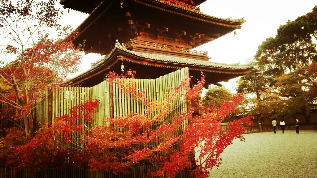 真言宗の総本山を訪れた&紅葉も綺麗 | 京都・東寺