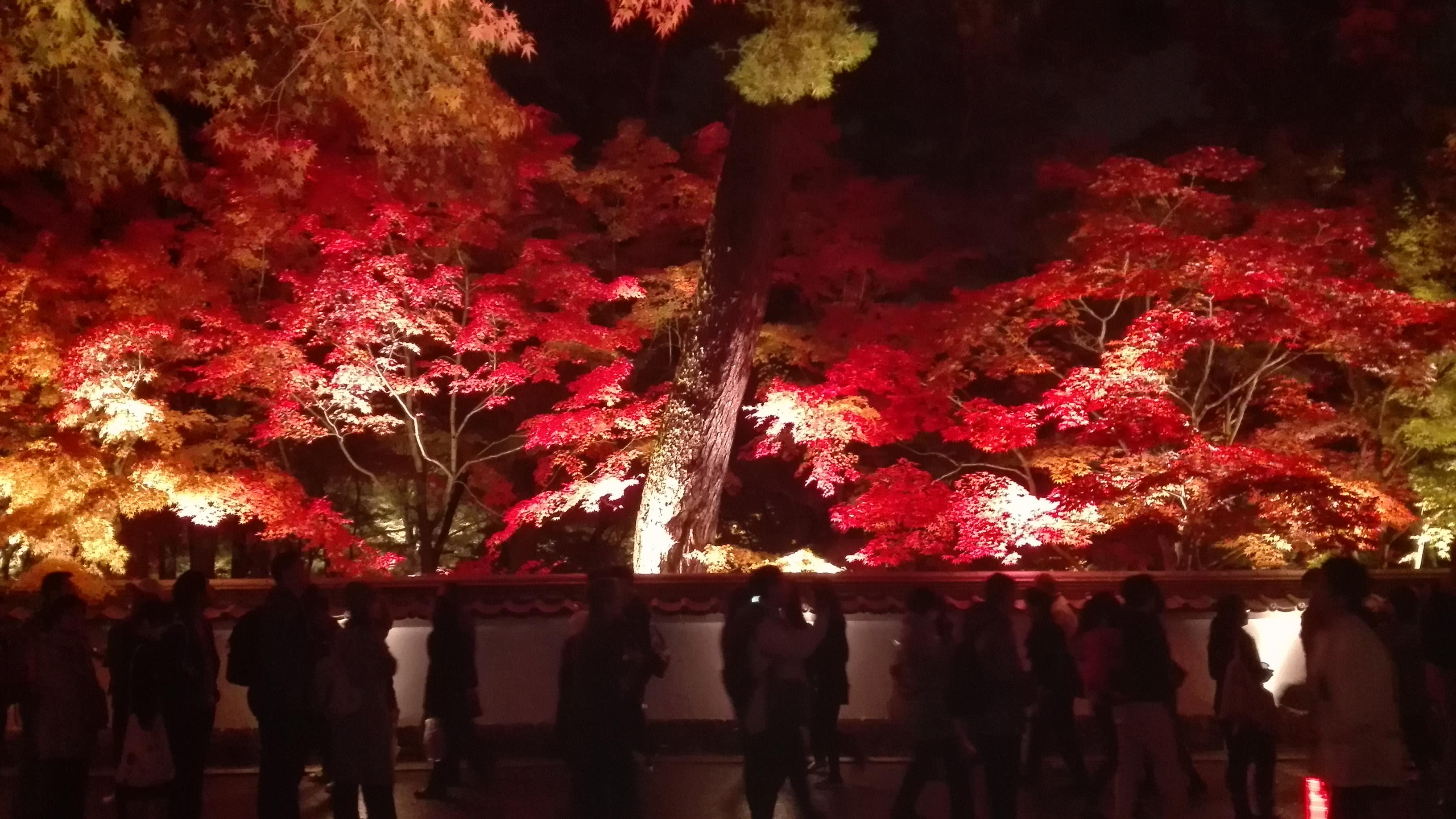 永観堂の紅葉ライトアップ&無料でも楽しめる