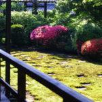 東福寺で苔観察 ウマスギゴケが見事な方丈庭園ほか